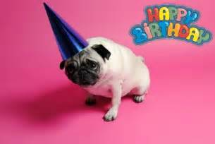 pug birthday card puggies