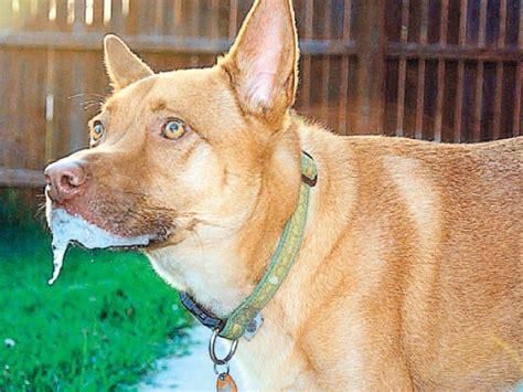 imagenes para dedicar con rabia mascotas c 243 mo identificar la rabia en los perros