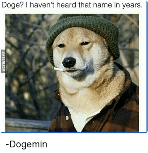 Doge Meme Pictures - doge dog www pixshark com images galleries with a bite