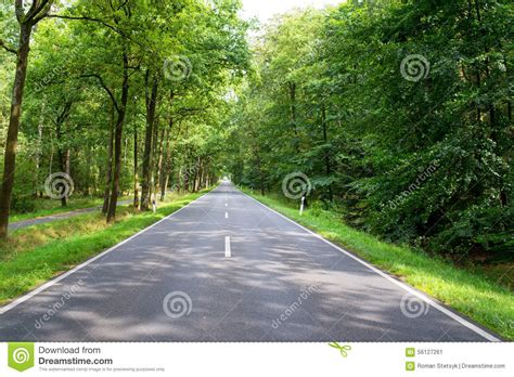 road in forest stock photo image of darkness mist road in the forest stock photo image 56127261