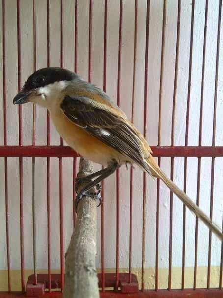 download mp3 suara adzan di mekkah download suara cendet liar asli di alam mp3 binatang