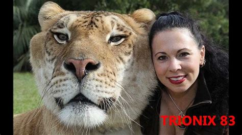 imagenes sorprendentes de animales gigantes animales extra 241 os animales gigantes youtube