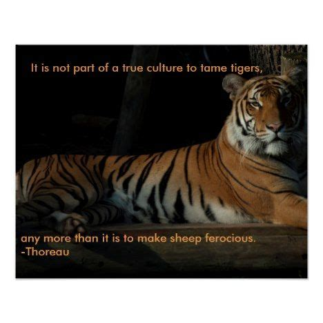 tiger quotes 1000 tiger quotes on motivation quotes