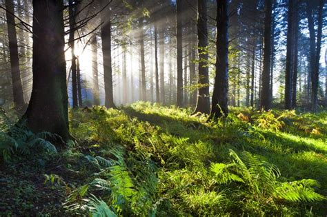 declaring godã s a collection of nature photographs books 21 reasons why forests are important mnn nature