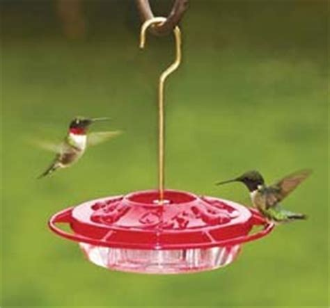top 28 what do i put in my hummingbird feeder