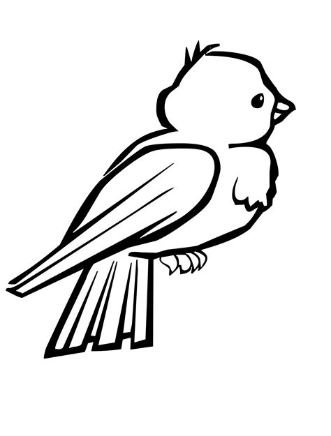 pictures of birds to color coloring pages of small birds coloring pages