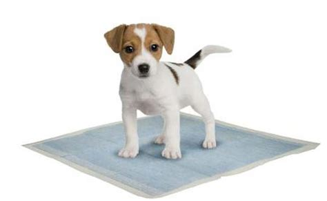 puppy potty pads top 5 best puppy potty pads for toilet top tips