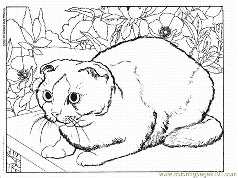 tabby kitten coloring pages coloring pages
