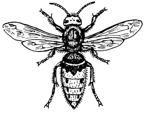 hornet tattoo wasp pictures pics images and photos for inspiration