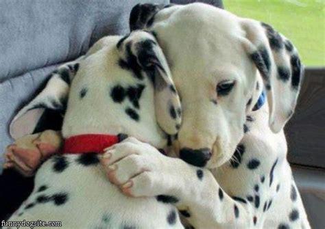 puppy hug hug funnydogsite