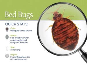 how long can bed bugs live on clothes how to kill bed bugs by washing arbor pest management