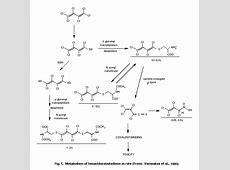Gamma-glutamyl transpeptidase. Causes, symptoms, treatment ... Gamma Glutamyl Transferase