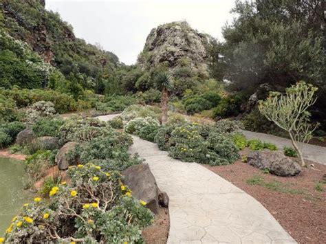 jardin canario tafira jardin canario fotograf 237 a de jard 237 n bot 225 nico canario las