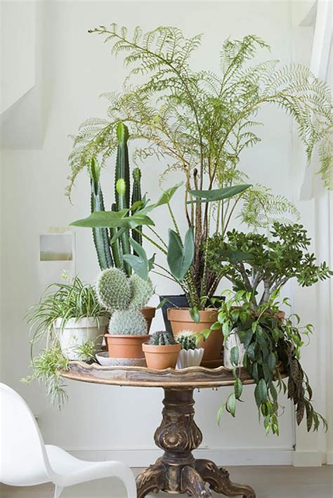 Indoor Plants For Interiors A 33 Creative Ways To Include Indoor Plants In Your Home