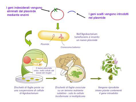 biotecnologia alimentare manipolazione genetica e tecnologia l ingegneria genetica