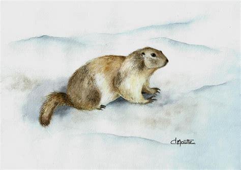 Petite Marmotte Des Hautes Alpes