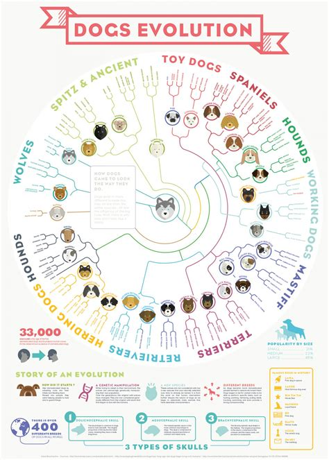 the evolution of dogs the evolution of dogs petplan