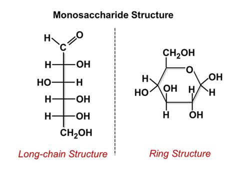 carbohydrates easy definition image gallery monosaccharides