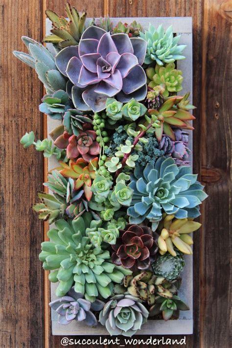 best 25 succulent wall gardens ideas on