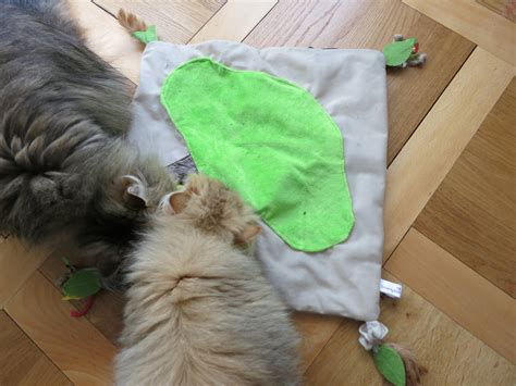 smartkat activity mat review meow lifestyle