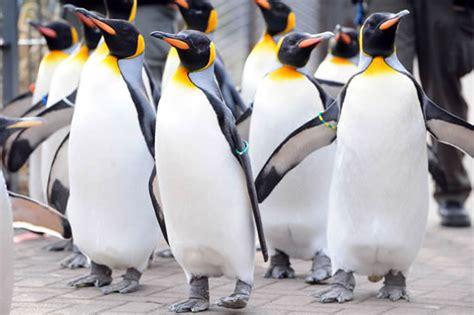 discount vouchers edinburgh zoo holiday apartments edinburgh