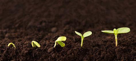 Garten Pflanzen Februar by Gartentipps Im Februar 7 Pflanzen F 252 R Den Start Gr 252 223 Gott