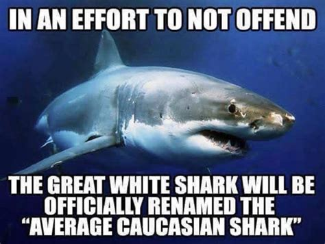 Great Funny Memes - the great white shark funny pictures quotes memes jokes