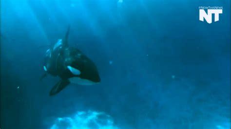 Gif Animals Science Sharks Biology Marine Biology Behavior - sea animals gifs find share on giphy