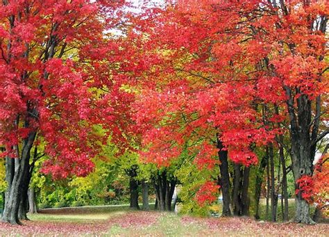 wallpaper alam korea kumpulan gambar pohon wallpaper pemandangan indah