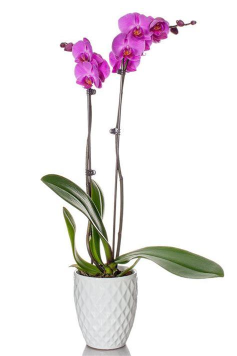 can you buy plants on amazon 10 plants you can buy on amazon shop for houseplants and