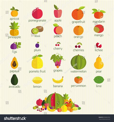 i fruit names basics healthy nutrition most common fruits stock vector