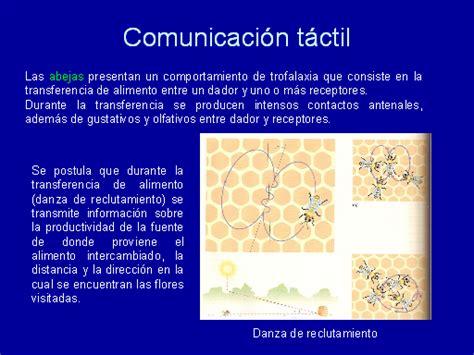 imagenes literarias tactiles ejemplos la comunicaci 243 n en los animales monografias com