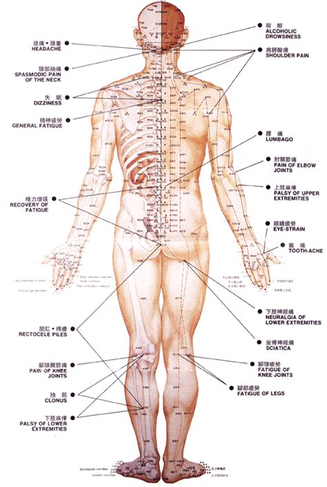Acupuncture For Detox by Acupuncture Points Back Repinned By Www Academ Nl Www