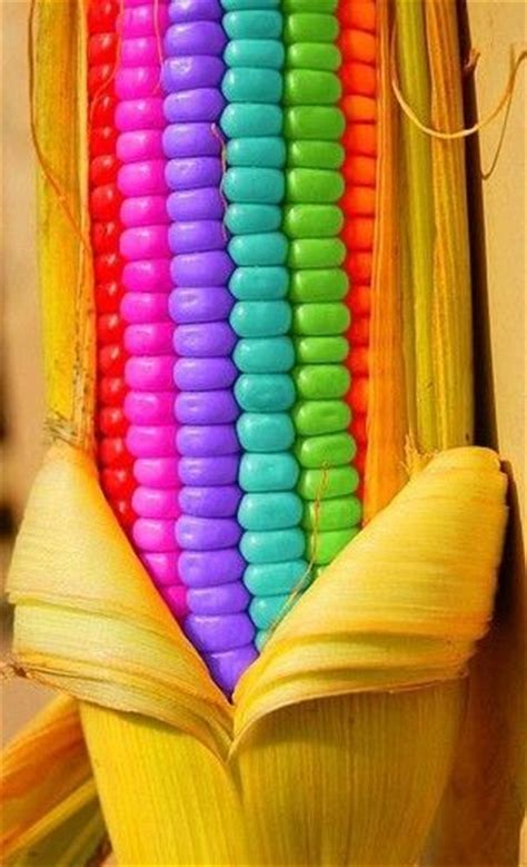 colors of corn 6129 best images about all the colors of the rainbow on