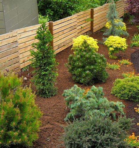 Green Foliage Outdoor Plants - dwarf conifers for the garden whitehouse landscaping