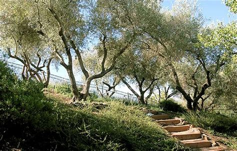 Olive Garden Creek Az by Mediterranean Landscaping Walnut Creek Ca Photo