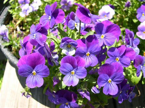 flower plants garden flowers
