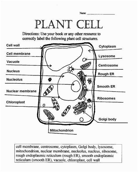 Parts Of A Cell Worksheet diagrams of a plant cell printable diagram