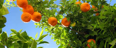 blue q fruit produce company australian investment firm targets growing asian demand