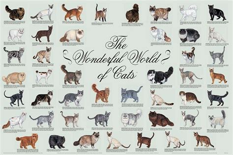 breed o breed poster cat breeds cats the o jays and cat posters