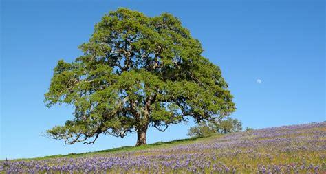 bigw trees home big trees nursery