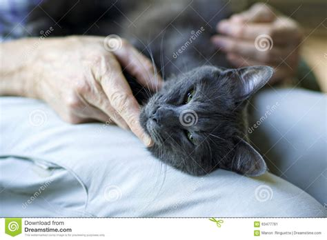 how to comfort a sick cat comforting a sick cat stock photo image 63477761