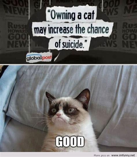 New Grumpy Cat Memes - new grumpy cat meme