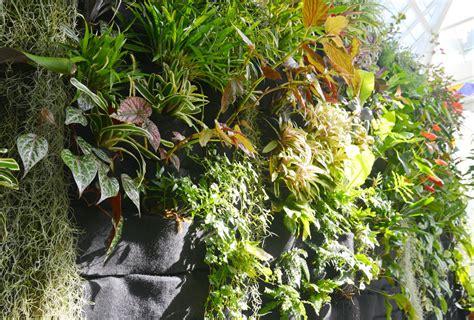 best plants for vertical garden vertical garden plants florafelt vertical garden guide