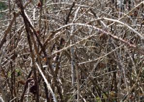 Types Of Garden Bushes - pesky brambles landscape gardener in ammanford uk
