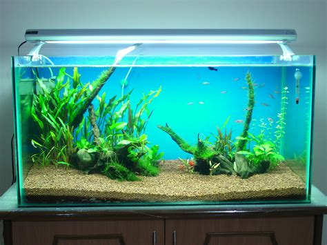 aquascaping tall tanks 30 gallon fish tank 50 aqua 30 gallon tower aquarium fish tank aquariums at