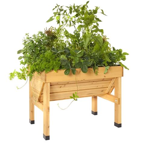 Raised Vegetable Garden Beds Bunnings Raised Garden Bed Veg Trug Timber S Bunnings Warehouse