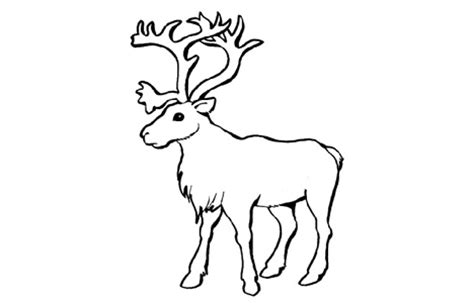 coloring pages of tundra animals 9 images of arctic tundra animals coloring pages arctic