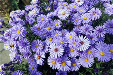 Pflanzen Die Keine Sonne Brauchen 4286 by Die Besten Balkonpflanzen F 252 R Sonnige Und Schattige Balkone