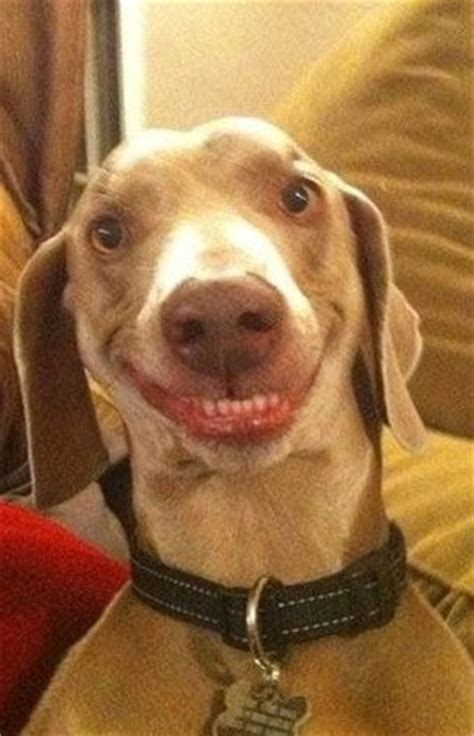 dogs  absolutely hysterical expressions